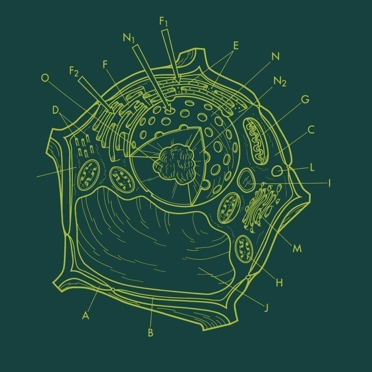Plant Cell Tshirt Science Diagram Quirky illustration