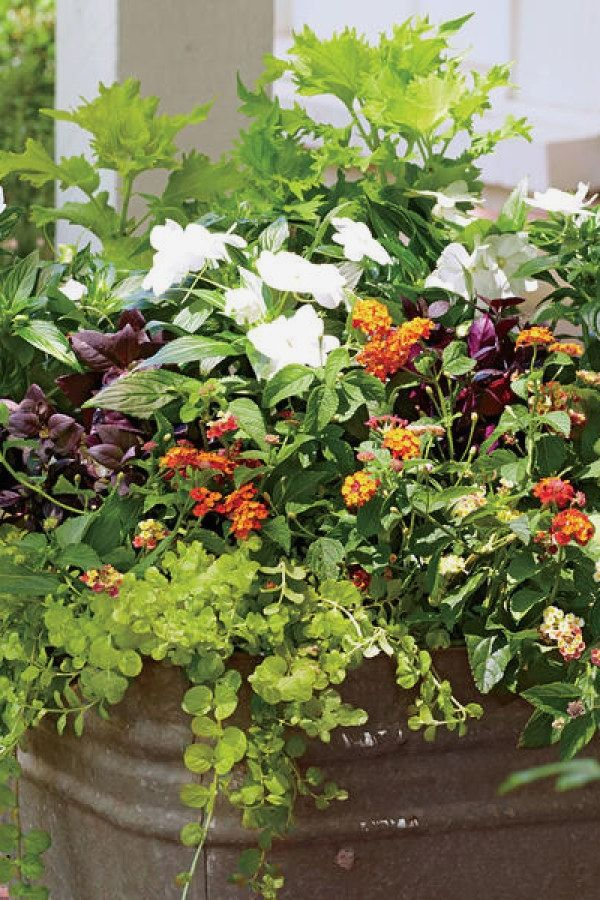 10 Awesome Container Gardening Designs you can do yourself for your