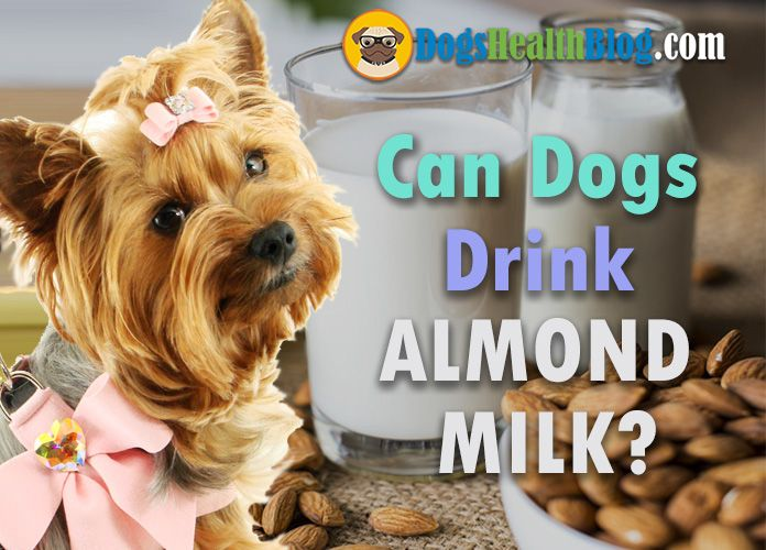 Can Dogs Drink Almond Milk Is Almond Milk Safe For Dogs In 2020 With Images Almond Milk Milk Canning