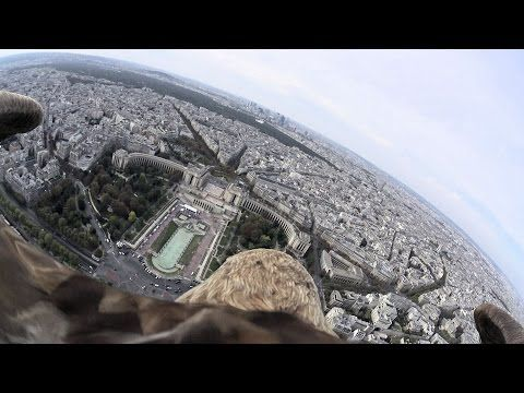 A Camera Was Mounted To An Eagle Flying Over Paris And It's Breathtaking