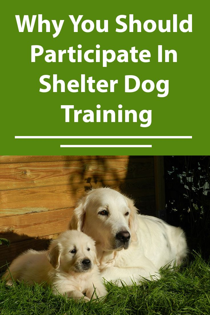 Shelter Dog Training Why You Should Participate Shelter Dogs