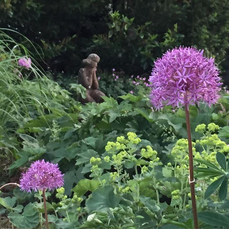 Idag har jag befunnit mig i rabatten, rensat ogräs och klippt ner tulpaner! /Great day in the garden with my flowers!  #hemmahosmig #myhome #micasa #trädgård #garden #jardin #blommor #ogräs #flower #flores #allium #daggkåpa