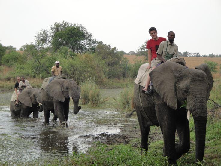 Elephant safari in Botswana.