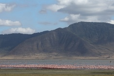 Passage To Africa - Ngorongoro Crater - Tanzania #flamingoes