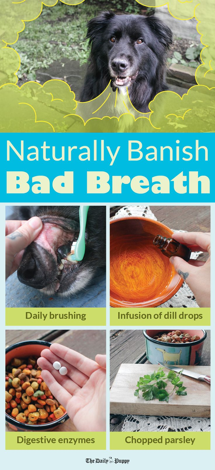 Whew, dog breath can be rough sometimes!  If your pup's breath could use a tune up, click through to see some natural ways to help freshen it up.