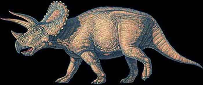 Triceratops.  Always been my favorite dinosaur.