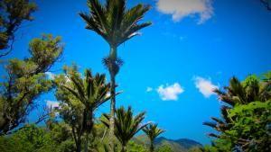 Grove Palms.JPG