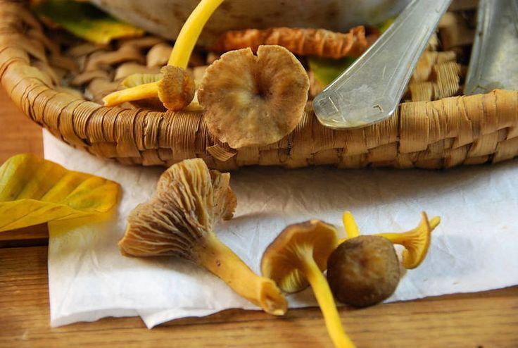 Risotto aux champignons des bois -Tangerine Zest