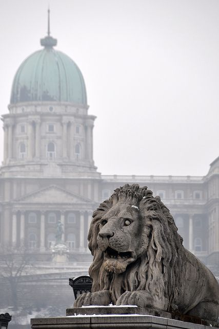 One of the lions of Chain Bridge with the Royal  Palace in the back #Budapest (by Philipp Korting)