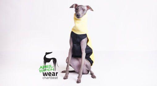 Ubranka dla charcików włoskich #charcikwloski #italiangreyhound #dogwear #fashion