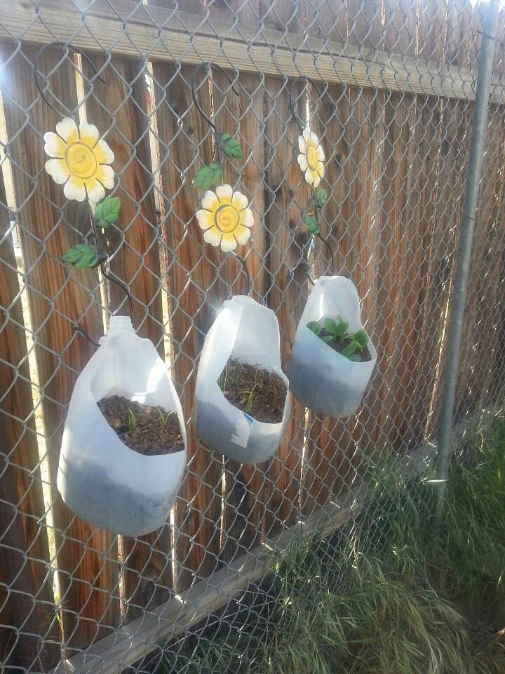 Milk jug garden  Stuff to Try  Growing vegetables