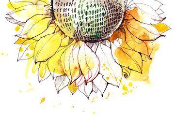 sunflower illustration                                                                                                                                                                                 More