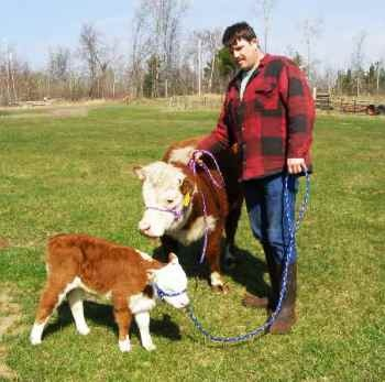 Miniature Hereford cow...... i remember when i was in 6th grade i had a convo w/ my then friends about how i wanted a miniature cow.. they looked at me like i was crazy. WHAT NOW! haha