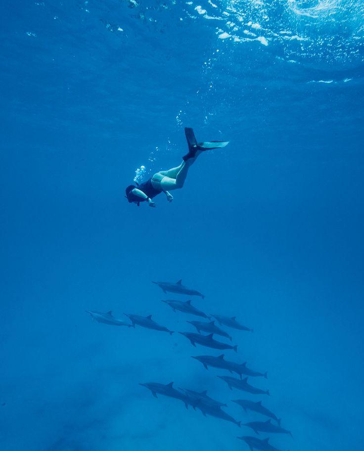 """オアフ島の西の海には、野生のイルカが群れをなしている。野生ゆえ、水族館に生息するのとは違う""""素""""のイルカだ。"""