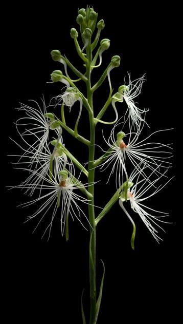 El Blog de La Tabla: orquídeas                                                                                                                                                      Más