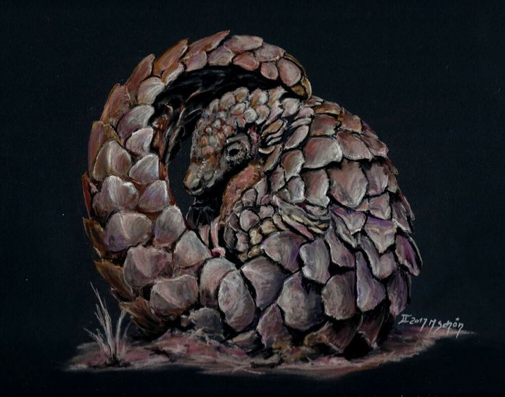 By Marion Schon for ABUN - artists and biologists unite for nature in collaboration with the African Pangolin Working Group and OMG. Photo credit: Cedric Jacquet and Elyane van Coillie.