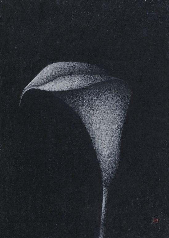 Night Flower / Art by Slavomir Zombek