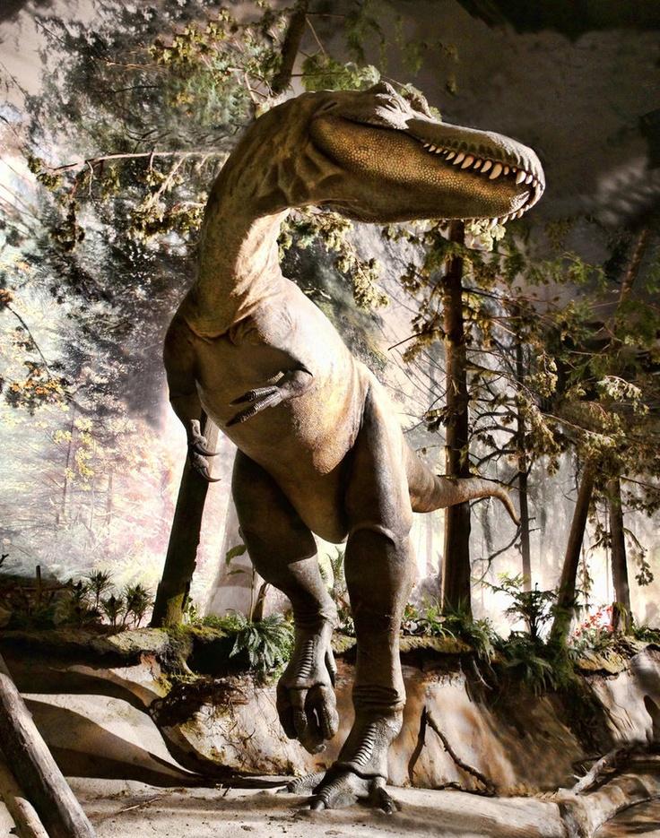 Dinosaur 3 Picture Panorama