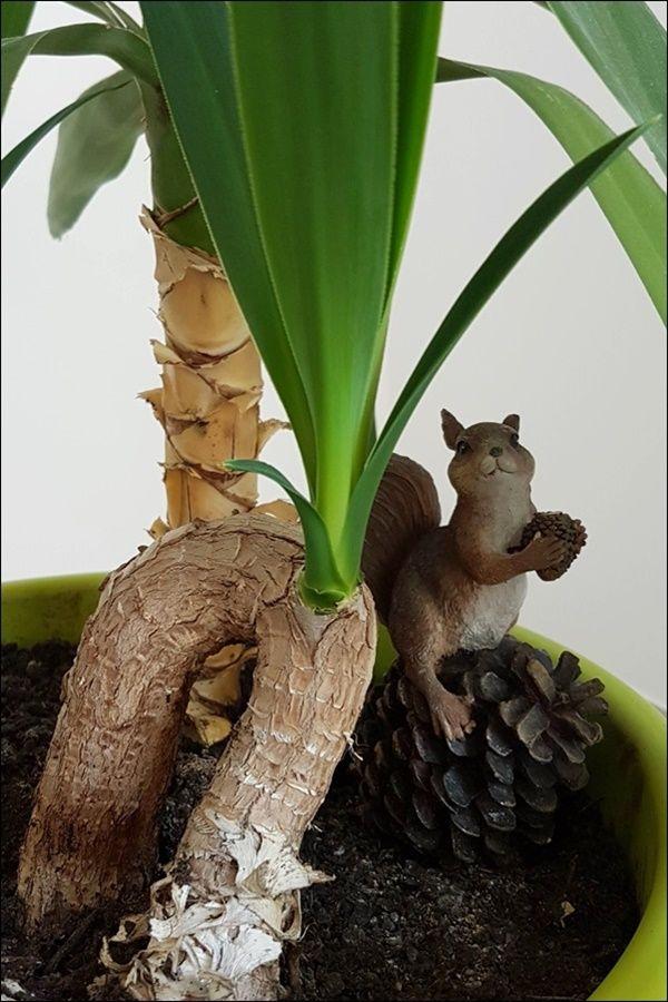 Yucca Palme Vermehren Aus Eins Mach Drei So Einfach Geht Das