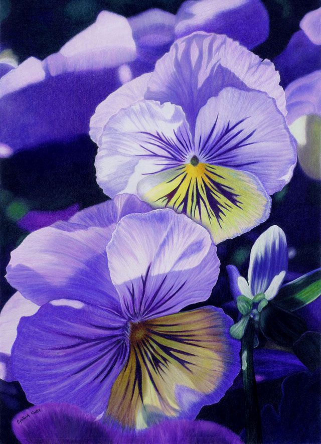 35 Beautiful Flower Drawings and Realistic Color Pencil Drawings