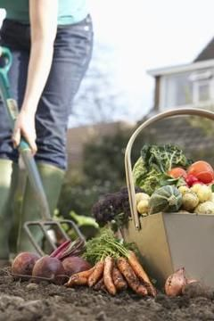 How to Replant a Vegetable Garden for Successive Crops