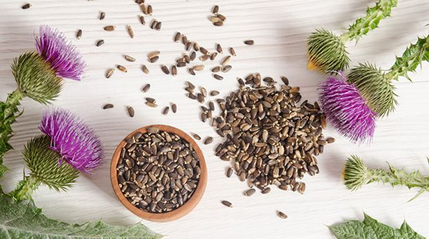 Your liver works hard getting toxins out of your body. Discover how milk thistle can help cleanse and refresh your liver so it can do its job.