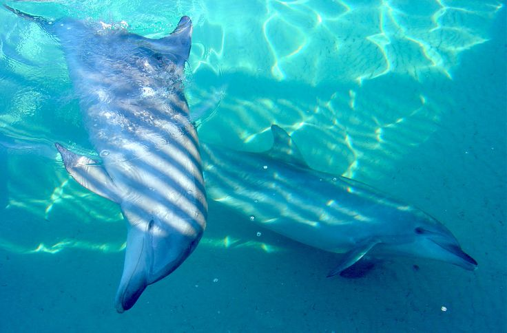 Dolphins (photograph by Kirsty Tull)