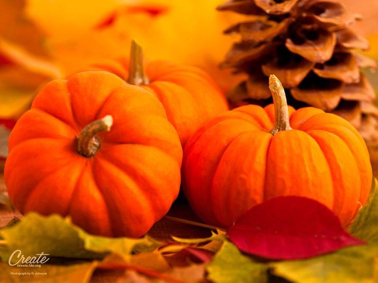 28 best images about desktop wallpaper on pinterest the - Pumpkin wallpaper fall ...
