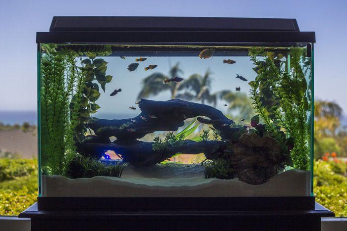 No reserve 29 gallon aquarium 10 gallon terrarium w for 10 gallon fish tank for sale