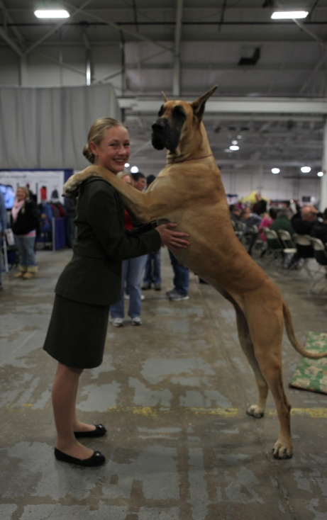 Joy the Great Dane: Meet all the breeds at the National Dog Show, Thanksgiving Day 12-2 pm on NBC