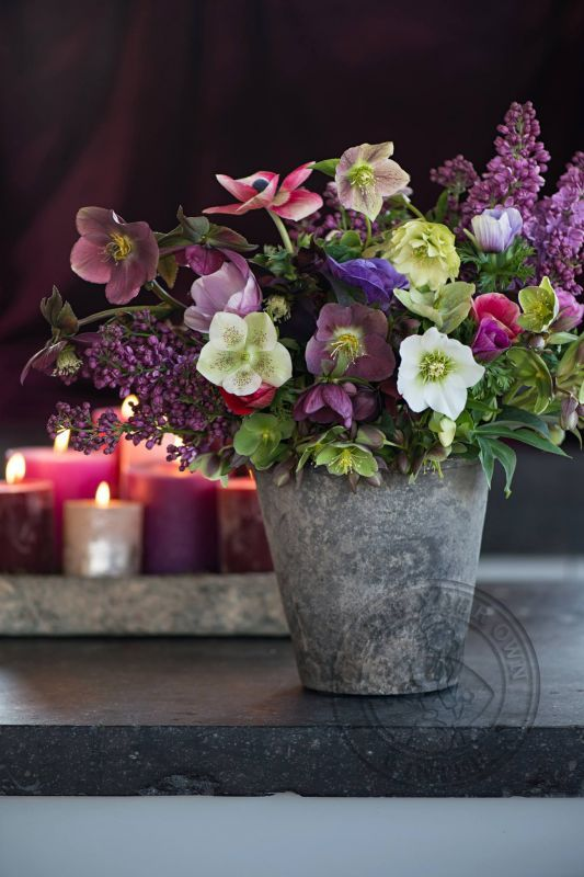 Hellebores and lilacs