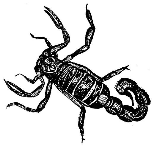 Scorpion illustrated by Tony Stakes