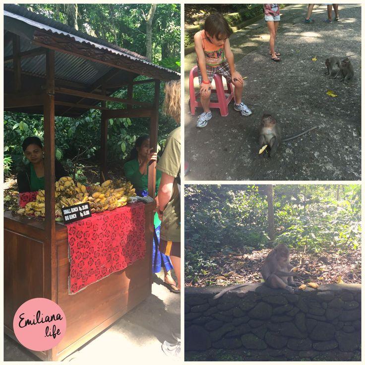 Bananas Sacred Monkey Forest, Ubud, Bali, Indonesia