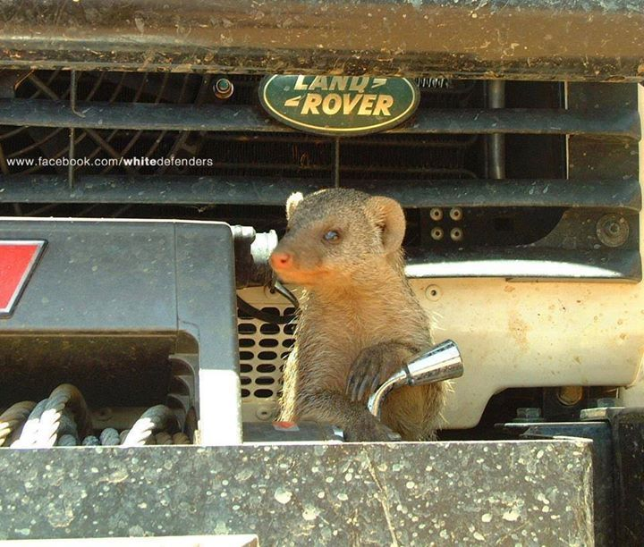 367 Best Land Rover Lifestyle & Culture Images On
