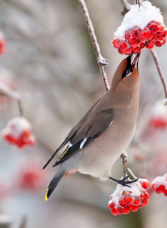 Gourmand | branch, beak, bird