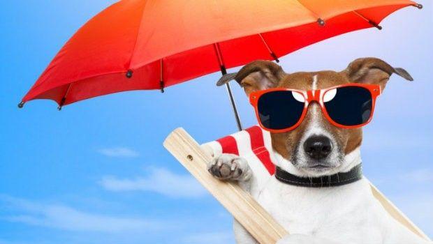 Le spiagge più belle per i cani!