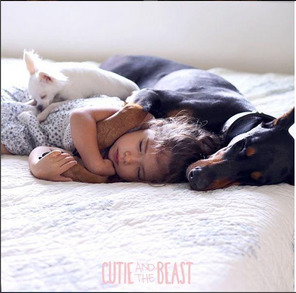 Nunca tengas un perro Doberman (peligrosos con los niños)