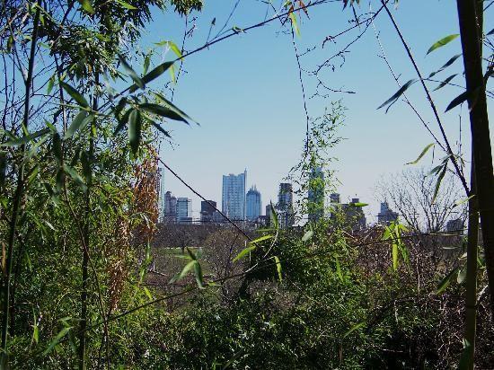 Zilker Botanical Garden: A View Of Downtown Austin | Zilker Park Isamu  Taniguchi Japanese Garden: Austin | Pinterest
