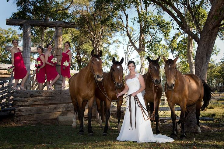 Fair dinkum, this is a stunning photo of horses and bridal party.