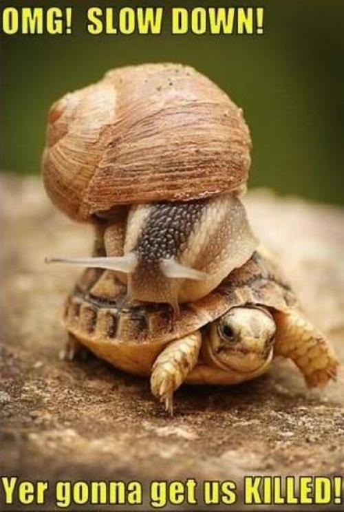 OMG! Slow Down! ..Get a free starbucks giftcard ! http://www.pinterestoffers.net/starbucks