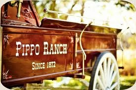 Pippo Ranch is a great local hot spot for outdoor events in Vacaville. They will help with just about all aspects of planning to make sure your event is a memorable one. Call (707) 448-5782 for more info.