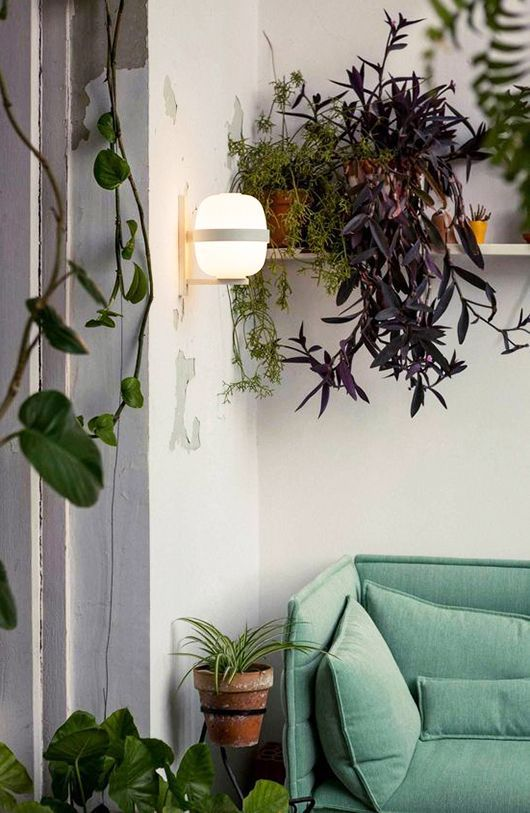 sumptuous design ideas green house plant identification. get your green jeans on  446 best i n d o r g a e images Pinterest Container