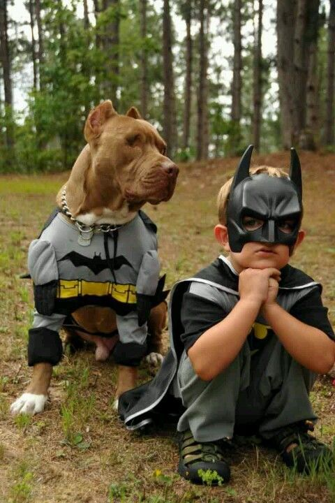 Batman says... Robin is not a dog!