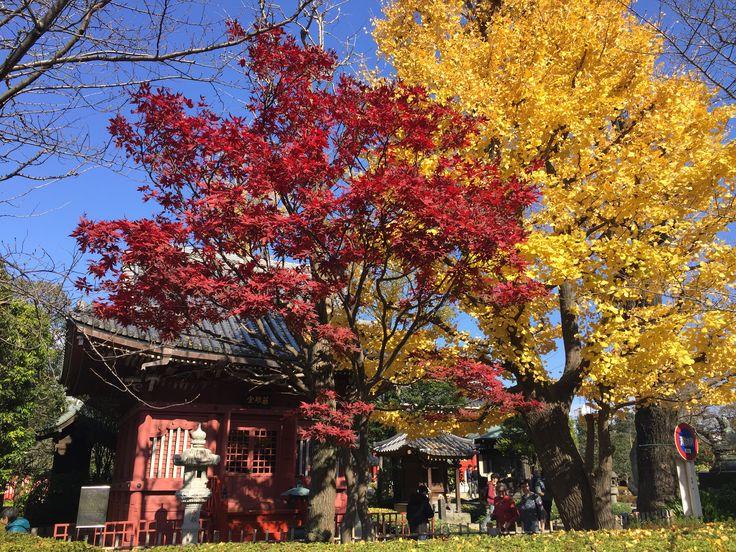 #autumn in tokyo