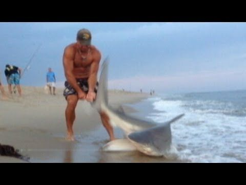 BestVacationsInUSA NOT  Man Wrestles Shark With Bare Hands: Caught on Tape