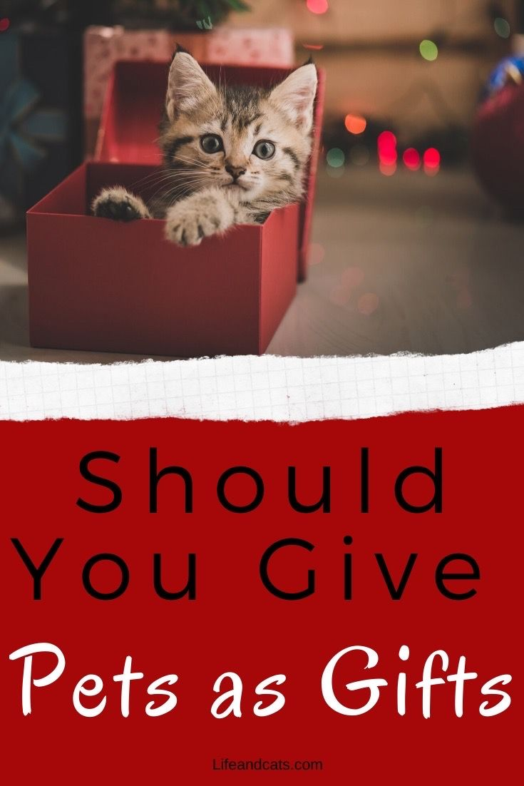 Should You Give A Pet As A Gift Life Cats Pets Cat Care Cat Care Tips