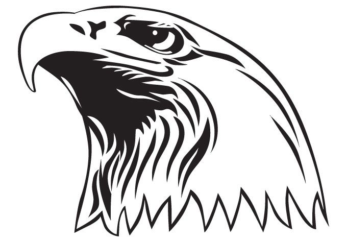 Golden Eagle Head Coloring Sheet American Flag Coloring Page