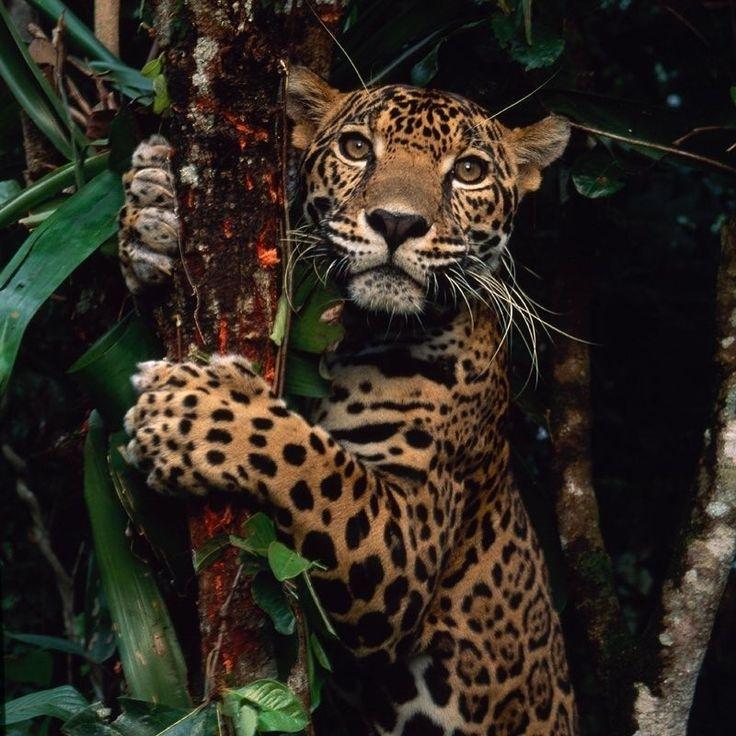 Melanin Black Magic in 2020 Animals, Animal photography