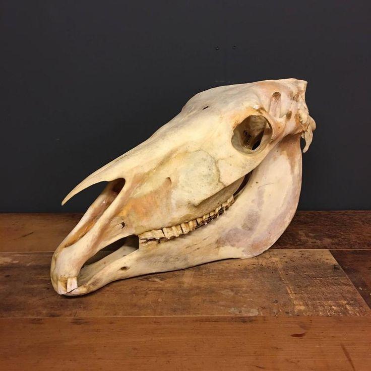 71 best Horse Anatomy images on Pinterest   Horse anatomy, Animal ...