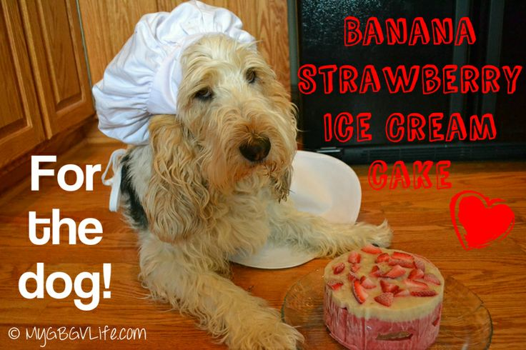 My GBGV Life - chef Emma is making a Banana Strawberry Ice Cream Cake for dogs, super easy and totally tasty!